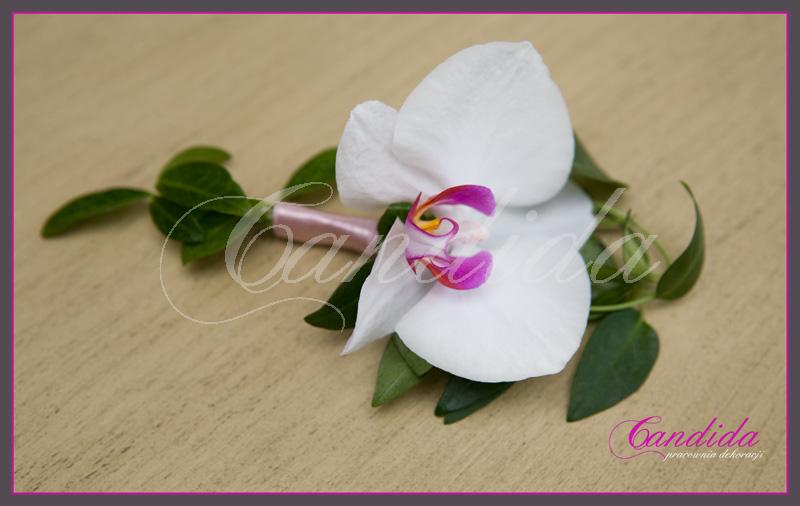Butonierka dla Pana Młodego wykonana ze storczyka phalenopsis, barwinka