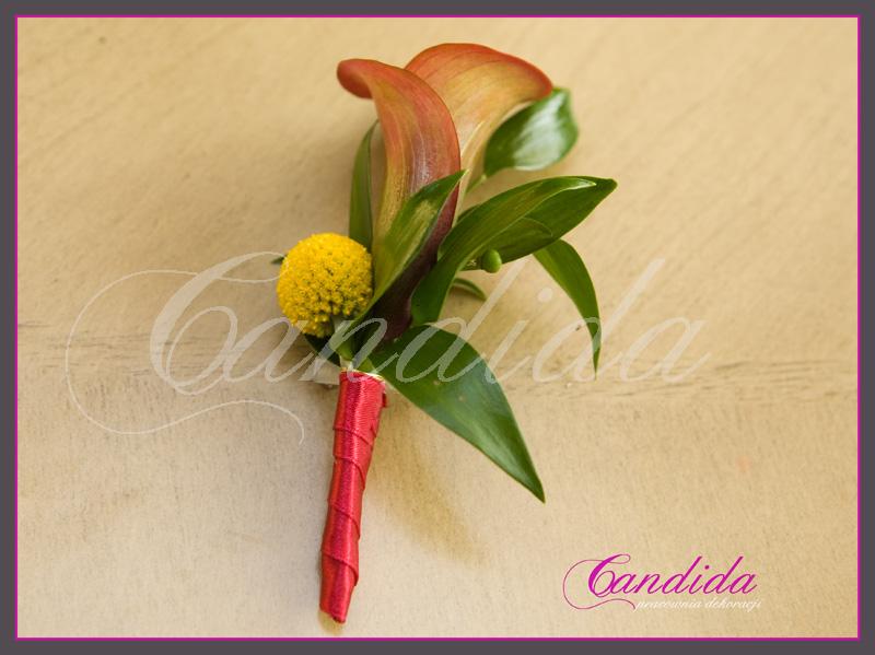 Butonierka dla Pana Młodego wykonana z różowej cantedeskii, ruscusa, crapsedii