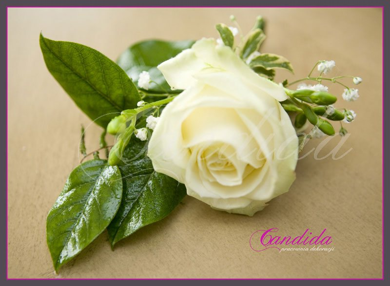Butonierka dla Pana Młodego wykonana z białej róży, białej frezji, salalu, butonierki 28