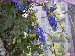 jabłonka przyozdobiona kwiatami usytuowana przy altanie, miejscu zaślubin, dekoracje kwiatowe  ślubu w plenerze w Dworze Radzin 27